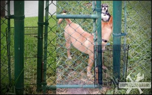 Gated Dogs