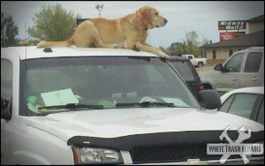 dog-ontop-car